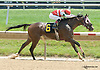 Master of Humor winning at Delaware Park on 7/18/13