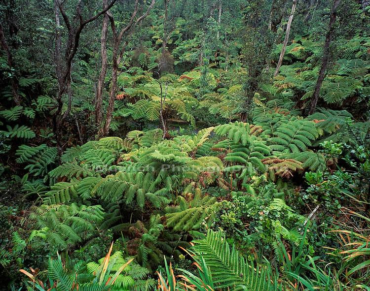 """Kilauea Ohia,  Hawaii Volcanoes National Park"