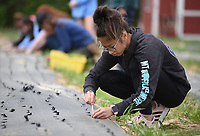 NWA Democrat-Gazette/DAVID GOTTSCHALK Faith Caviness, an eighth grade student at The New School, plants leeks Thursday, April 11, 2019, with other seventh and eighth grade students from the school during a service project at Cobblestone Farms in Fayetteville. Cobblestone Farms is a non profit that donates half of the food grown to food insecure families in the northwest Arkansas area.