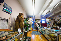 Main display room at the Cryptozoology museum, Portland Maine, USA