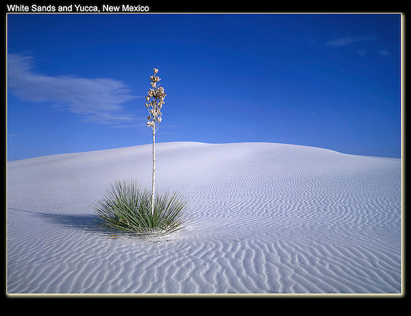 Stark contrast, Yucca plant on sterile sand.<br /> White Sands National Monument, Alamogordo, New Mexico. .  John offers private photo tours in Arizona and and Colorado. Year-round.