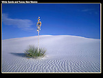 Stark contrast, Yucca plant on sterile sand.<br />
