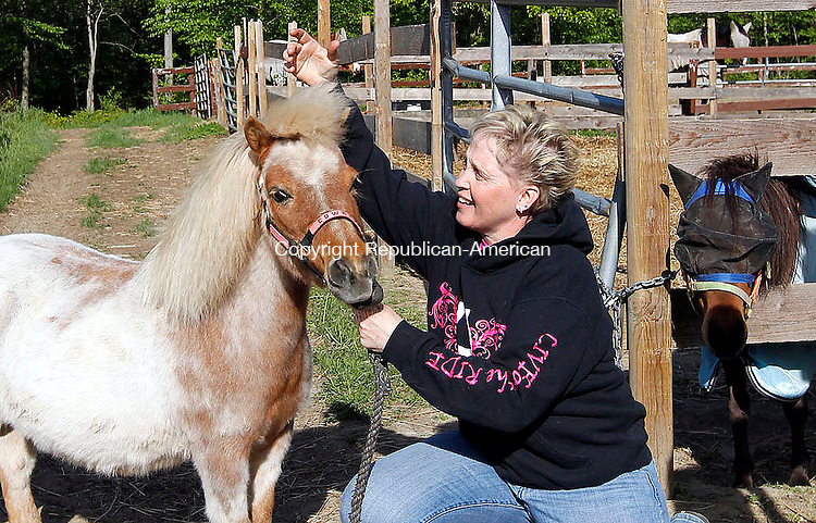 """Harwinton, CT- 17 May 2013-051713CM03-  Holly DiCrosta, owner of Whispering Woods Ranch plays with Cowboy, a mini horse at her ranch in Harwinton Friday afternoon.  DiCostra began a therapy program titled, """"Horses 4 Autism"""" with her horses, for children and adults affected by health conditions, including Autism.   Christopher Massa Republican-American"""