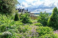France, Indre-et-Loire (37), Amboise, château d'Amboise, jardin paysager avec topiaires de laurier du Portugal (vérif), cardons, géranium