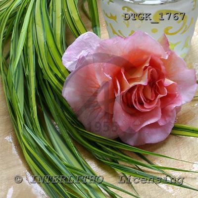 Gisela, FLOWERS, photos, DTGK1767,#F# Blumen, flores, retrato