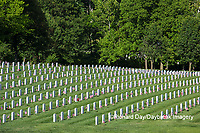 65095-01711 Flags on Memorial Day at Jefferson Barracks National Cemetery, St Louis, MO