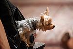 Jeffrey Silverstein's Dog