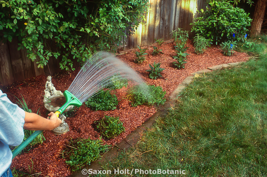 Gardener watering newly planted, mulched perennial border with hose wand.