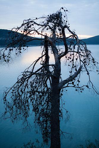 Ein ausgedorrter Baum ragt hinein ins Meer in Neum, Bosnien / A dead tree at the sea in Neum, Bosnia.<br />Der kleine Ort Neum liegt in Bosnien-Herzegovina und bildet den einzigen Zugang zum Meer des Balkanlandes. Auf einer L&auml;nge von 9 km durchschneidet der Ort das kroatische Staatsgebiet (Neum-Korridor) Seit dem EU-Beitritt Kroatiens ist Neum auf beiden Seiten von EU-Au&szlig;engrenzen eingeschlossen. / The small city of Neum in Bosnia and Herzegovina is the only place in Bosnia, where the country has access to the adriatic sea. Over a length of 9 kilometers the area cuts Croatian territory in two pieces. Since Croatia became part of the European Union, the city of Neum is enclosed between two EU-boarders.