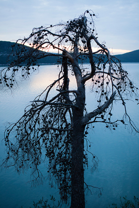 Ein ausgedorrter Baum ragt hinein ins Meer in Neum, Bosnien / A dead tree at the sea in Neum, Bosnia.<br />