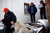 Jacek Serkiew, 60-years old Polish postman delivering the letters to Maria Trembicka-Podlaska and Masgdalena Podlaska, caressing their dog Naomi. It's winter and he works in snow covered Piaseczno in central Poland. Jacek is celebrating 40-th anniversary of his work as a postman..January 2010.(Photo by Piotr Malecki / Napo Images)..Praca listonosza. Jacek Serkiew doreczyl list Marii Trembickiej Podlaskiej i Magdalenie Podlaskiej, glaszcze ich psa Naomi. Jacek wlasnie obchodzi czterdziestolecie pracy na tym stanowisku. .Piaseczno, Styczen 2010.(Fot: Piotr Malecki / Napo Images) ...