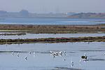 Egrets at Elkhorn Slough