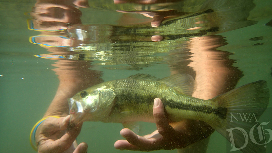 """NWA Democrat-Gazette/FLIP PUTTHOFF<br />""""Free the fighter"""" is the motto of Melissa Nichols of Jane, Mo., when she floats and fishes Little Sugar Creek. She releases a largemouth bass she caught Sept. 15 on Little Sugar with a spider jig."""
