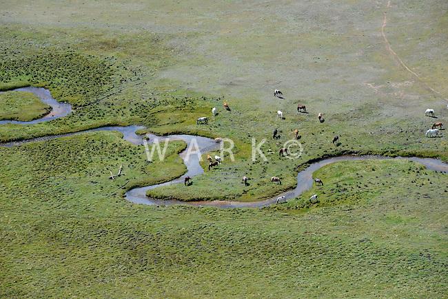 Horses grazing with mountain valley stream.  Near Jefferson, Colorado.  Sept 2013. 82578