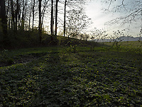FOREST_LOCATION_90222