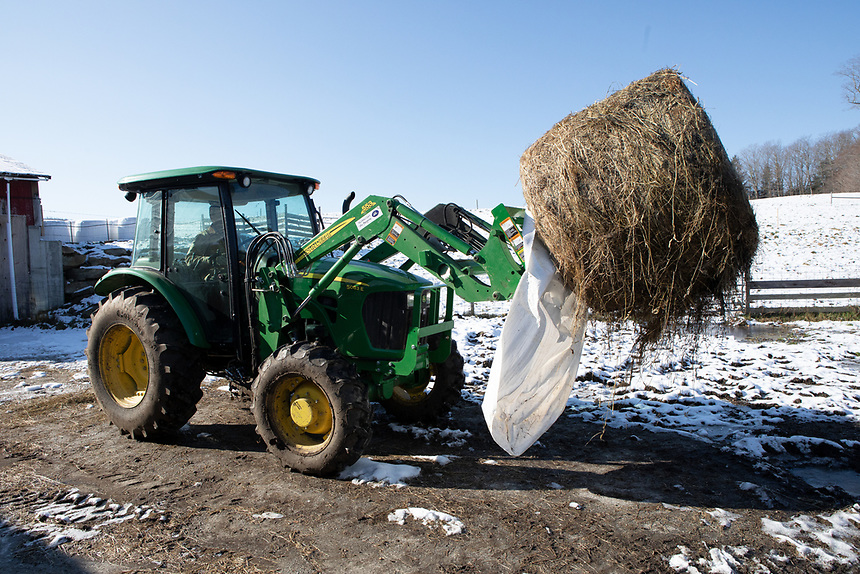 NORTHFIELD, VERMONT - Nathaniel Miller on his farm, Falling Damps Farm. Feeding time. Nathaniel brings hay to his cattle.