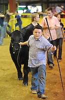 NWA Media/ANDY SHUPE - Dylan Kildow, 10, leads a heifer into the arena during the grooming competition of the  Junior Beef Showmanship competition Saturday, Aug. 30, 2014, at the Washington County Fair in Fayetteville. The fair concluded Saturday.