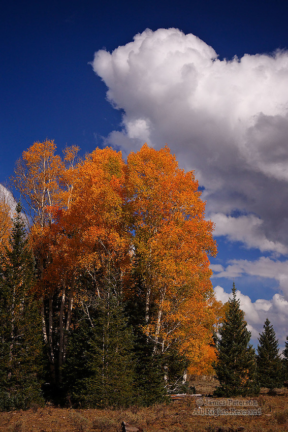 The Arrival of Autumn, Aquarius Plateau, Utah