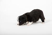 Pups 01-07-16
