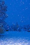 Snowing in Auburn