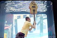 NEW YORK, NY, 01.06.2017 - HOLOSCENES-NEW YORK - Performance de artista durante apresetação do Holoscenes na Times Square em New York nesta quinta-feira, 01. (Foto: William Volcov/Brazil Photo Press)