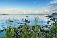 Gräs och stenar vid strandkanten på Rödlöga i Stockholms skärgårde Roslagen