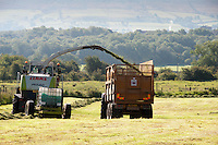 Forage harvesting grass, Waddington, Lancashire.