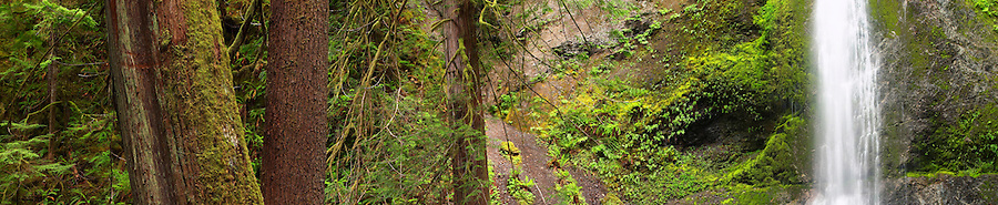 Panoramic of Marymere Falls and tree trunks, Olympic National Park, Olympic Peninsula, Clallam County, Washington, USA
