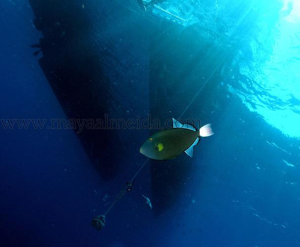 Underwater creative images