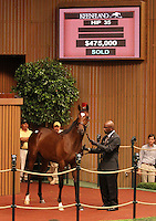 Hip #35 Medaglia d'oro - Swift Girl filly at the Keeneland September Yearling Sale.  September 10, 2012.