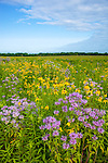 Starved Rock State Park, IL<br /> Open priairie with native prairie flowers yellow coneflower, and grasses