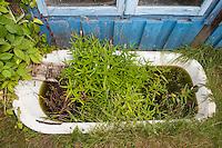 Miniteich, Gartenteich in einem Naturgarten. Alte Badewanne wurde im Garten aufgestellt, bepflanzt und dient als Biotop für Tiere. small pond, bath tub, bathtub