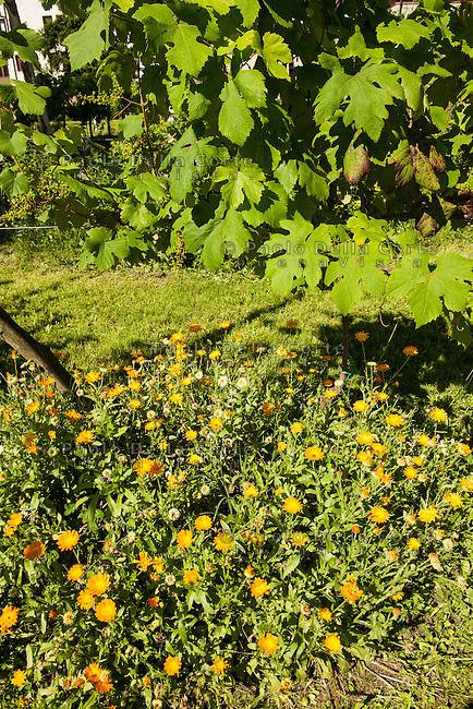 Venezia L'orto sinergico coltivato da Michele Savorgnano. Sono 300 le piante i fiori coltivati in questo spazio.