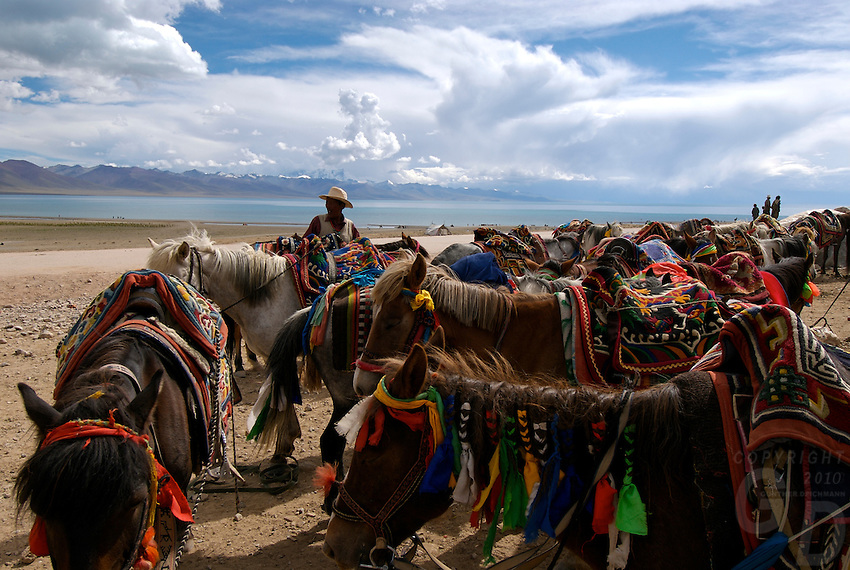 """Nomads near Namtso Lake with their horses.Namtso Lake :Namtso, another holy lake in Tibet, is located near Damxung. 4718 meters (15475 feet) above sea level and covering 1900 square kilometers (735 square miles), the lake is the highest saltwater lake in the world and the second largest saltwater lake in China. The snow capped Mt. Nyainqentanglha, considered as the son of Namtso and leader of sacred mountains, soars up to sky beside her. Singing streams converge into the clean sapphire blue lake, which looks like a huge mirror framed and dotted with flowers..The Namtso Lake is held as """"the heavenly lake"""" or """"the holy lake"""" in northern Tibet. .Respected as one of the three holiest lakes in Tibet, the Namtso Lake is the seat of Paramasukha Chakrasamvara for Buddhist pilgrims. In the fifth and sixth month of the Tibetan calendar each year, many Buddhists come to the lake pay homage and pray. Deep tracks are worn into the lakeshore due to this activity. In history, monasteries stood like trees in a forest around the site, attracting large numbers of pilgrims as eminent monks in Buddhist temples extended Buddhist teachings...Buddhists believe Buddhas, Bodhisattvas and Vajras will assemble to hold religious meeting at Namtso in the year of sheep on Tibetan calendar. It is said that walking around the lake at the right moment is 100,000 times more efficacious than that in normal years. That's why thousands of pilgrims from every corner of the world come to pray at the site, with the activity reaching a climax on Tibetan April 15...Walking around the lake takes a week. Ritual walkers love to burn aromatic plants to raise smoke on Auspicious Island [explain this a little] and throw a piece of hada scarf into the lake as a token of fulfilled wishes. If the scarf sinks, it implies ones wish is accepted by the Buddha; if the scarf flows on the water or only half sinks, it means one has failed to be honest and something unhappy may lie ahead...On the four sides of the lake stand"""