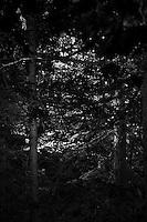 Foresta della Transilvania nei dintorni del castello di Bran (detto del conte Dracula) Forêt de la Transylvanie à proximité du Château de Bran (connu sous le nom de chateau du compte Dracula)