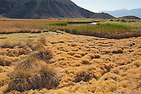 Saratoga Spring, Death Valley National Park, California