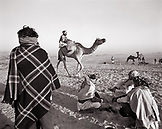INDIA, Rajasthan, the sale of a camel, Pushkar Camel Fair (B&W)