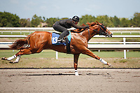 #134Fasig-Tipton Florida Sale,Under Tack Show. Palm Meadows Florida 03-23-2012 Arron Haggart/Eclipse Sportswire.