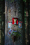 Drzewo na szlaku na Rusinową Polanę, Tatry, Polska<br /> Tree on the trail on Rusinowa Polana, Tatra Mountains, Poland
