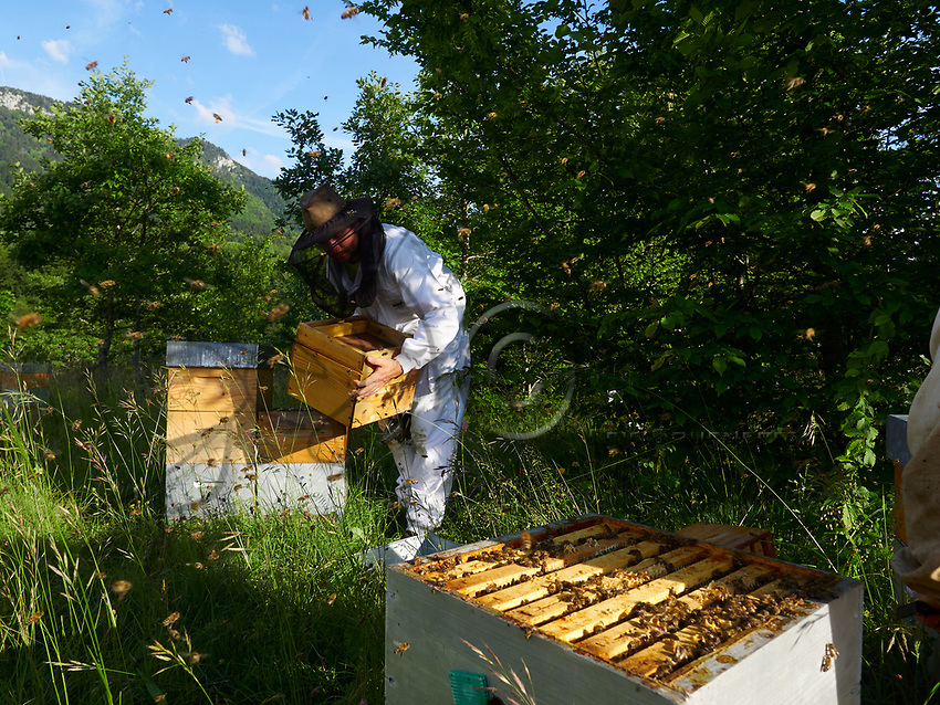 Inspection of the smaller Warré type of hives is much easier.<br /> L&rsquo;inspection des ruches de type warr&eacute; de plus petite taille est plus facile.