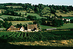 'WINE IN ENGLAND, SOMERSET', NORTH WOOTTON VINEYARD & HOME OF MAJOR GILLISPIE, IN SHELTERED VALLEY FEW MILES WEST OF CATHEDRAL CITY OF WELLS, 1989