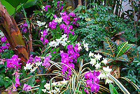 Orchids, Multiple Color Forest