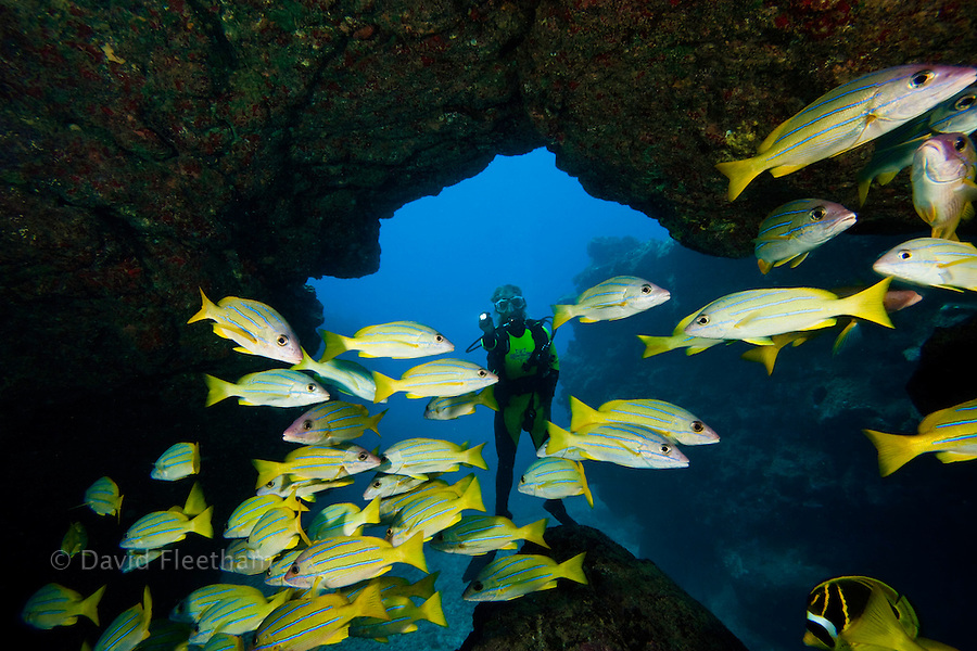 Diver and blue striped snapper, Lutjanus kasmira, at Sheraton Caverns off the island of Kauai, Hawaii.