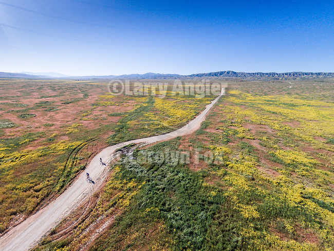 Bicycling on a dirt road through the colorful spring wildflowers from a DJI drone, Carrizo Plain, San Luis Obispo County, Calif.
