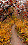 October 2009:  Autumn hiking trail in Garden of the Gods, Colorado Springs, CO.