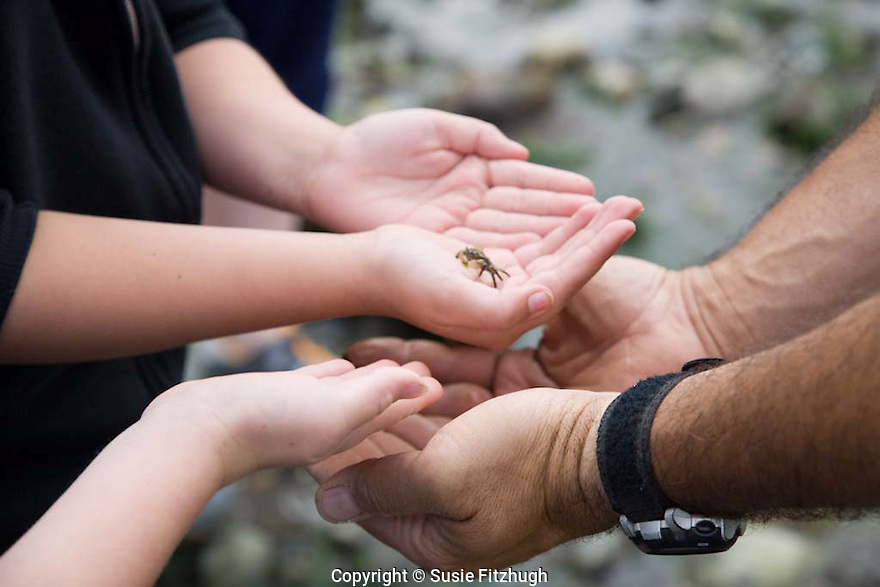 A small group of interested kids accompany a Naturalist to explore the creatures exposed at low tide along Seattle's Alki Beach.