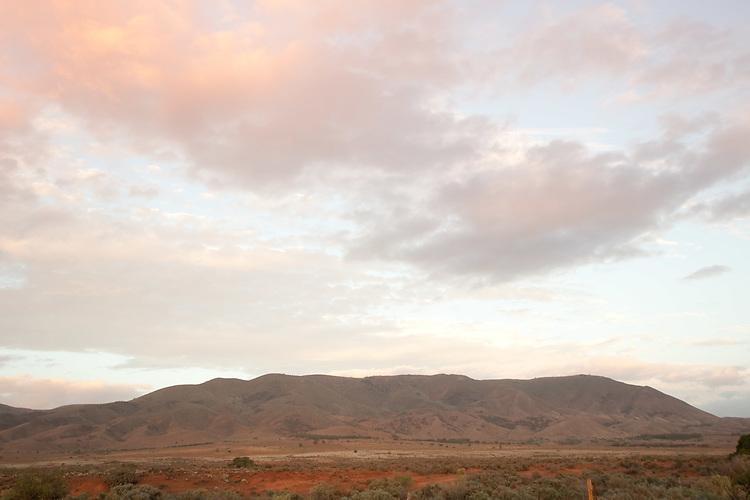 Spear creek , Dorper lam , Southern Flinders rangers,