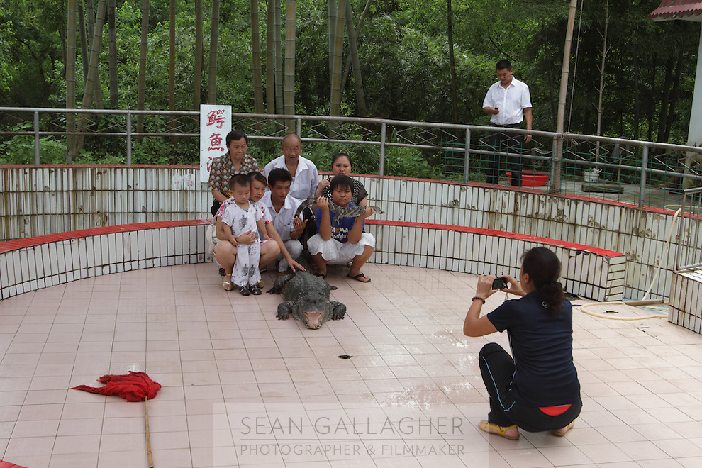 A family pose with a Chinese Alligator (Alligator sinensis),  Anhui Research Center for Alligator Reproduction. Only 120 individuals remain in the wild in China as a result of wetlands reclamation. Xuancheng City, Anhui Province. China. 2010