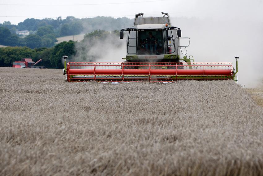 Photo: Richard Lane/Richard Lane Photography. Grain harvest near Little Missenden, Buckinghamshire. A Class combine harvester cutting winter wheat. 16/09/2008.