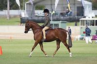Child's Hunter Pony over 13 NE 14hh